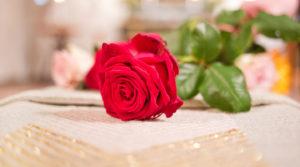 Begravning. Närbild på en röd ros som läggs på kista. Foto Evelina Carborn 2015.
