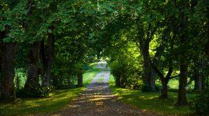 Grusväg mellan träd. Foto Linda Mickelsson IKON.