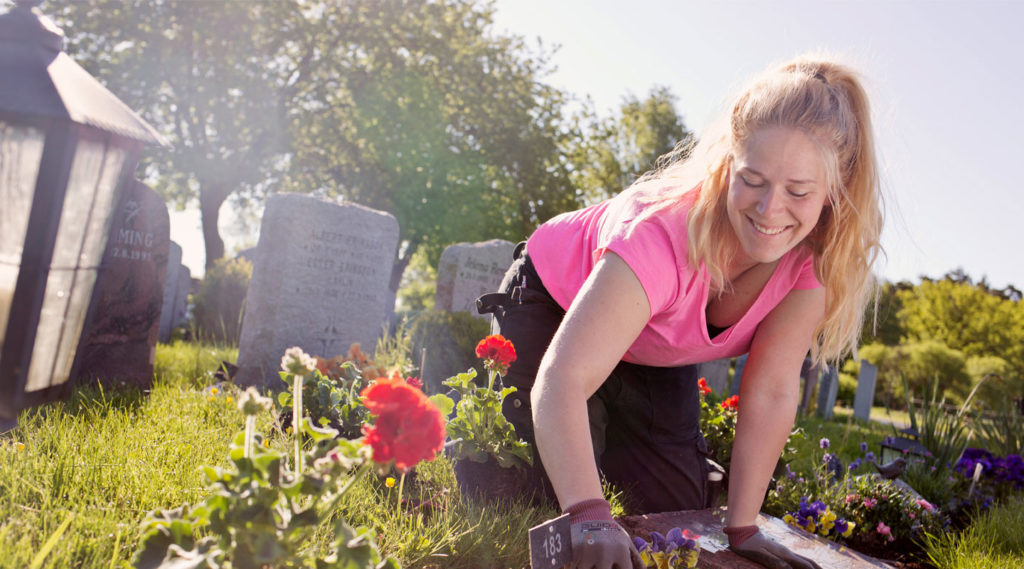 Plantering pågår på Lidingö kyrkogård. Foto Evelina Carborn 2015.